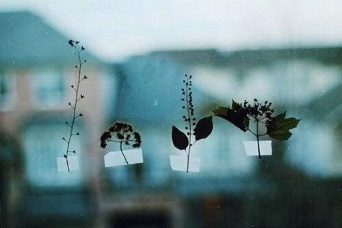 Mehrere Blätter kleben am Fenster