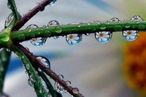 Tautropfen, die Blumen reflektieren