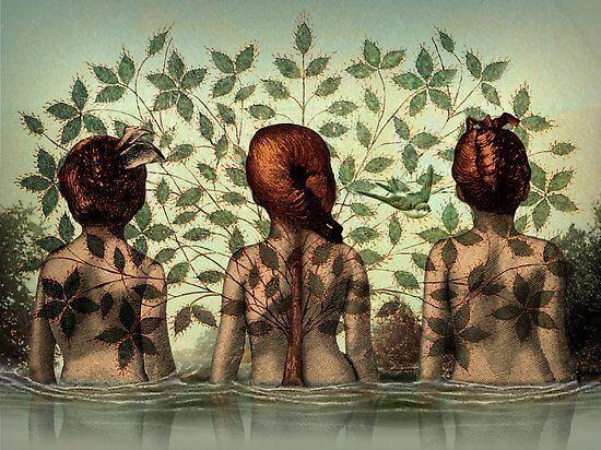 Drei Frauen verbunden durch eine Pflanze