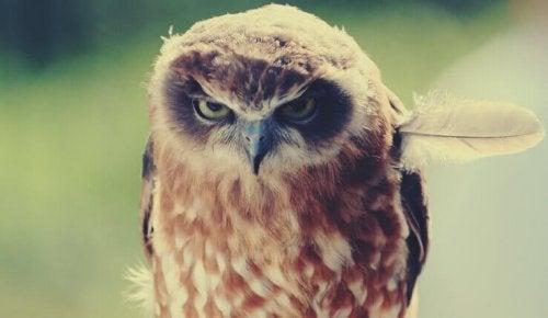 Ausdruck negativer Emotionen - Auch eine Eule kann böse schauen.
