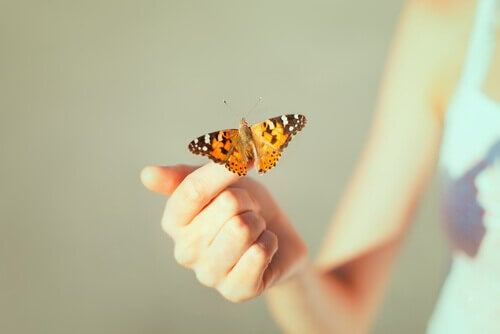 Frau hält Schmetterling auf ihrer Hand