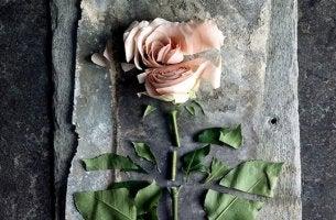 Zerschnittene Rose als Symbol für passive Gewalt