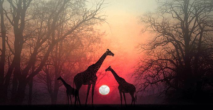 """""""Gib deiner Seele einen Moment, damit sie dich einholen kann"""" – eine wunderschöne afrikanische Erzählung"""