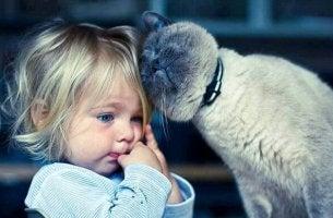 Katzentherapie - Weder Kinder noch Erwachsene sind gegen das Schnurren immun
