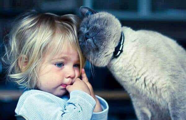Die Katzentherapie: Welche 5 Vorteile es hat, mit einer Katze zusammenzuleben
