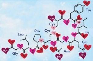 Glückshormon Oxytocin: chemische Struktur
