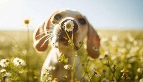 Welpe riecht an Blume