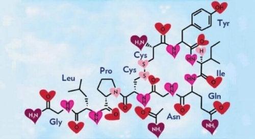 Liebesmolekül Oxytocin