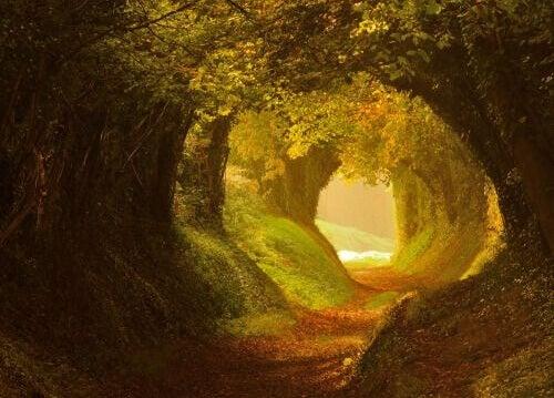 Tunnel aus Bäumen