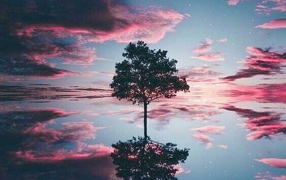 Baum unter lila Wolken