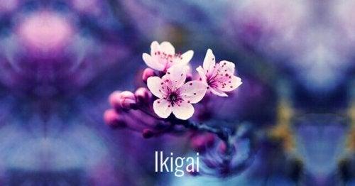 Ikagai in Form einer Blume