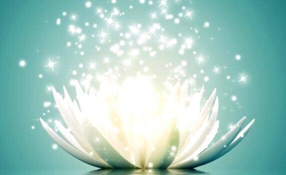 Leuchtende Lotusblüte