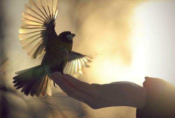 Vogel steigt von der Hand auf