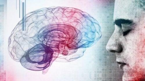 Gehirn und Mensch