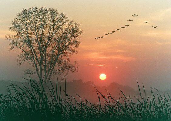 Vogelflug über Baum im Morgengrauen