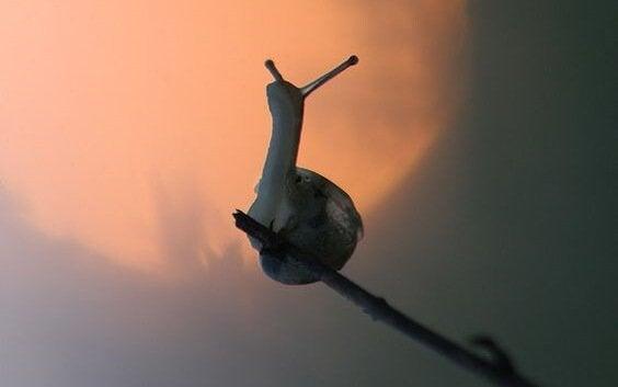 Eine Schnecke sitzt auf einem Zweig