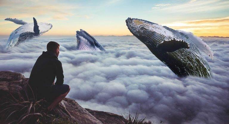 Buckelwale durchbrechen die Wolkendecke