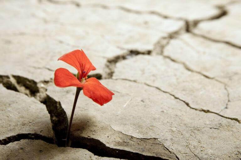 Kleine rote Blume bahnt sich ihren Weg