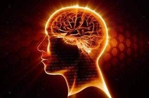 Die grauen Zellen schützen - gesundes Gehirn