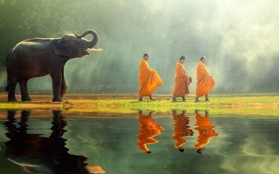 Elefant, der hinter drei Mönchen geht