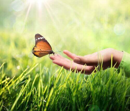 Schmetterling, der auf einer Hand sitzt