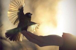 Kleiner Vogel sitzt auf einer Hand und startet nach oben