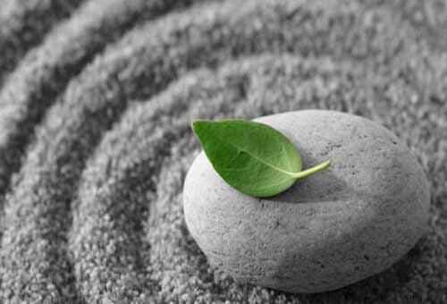 Ein grünes Blatt, das auf einem Stein liegt.