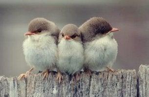 Arten von Freundschaft - Drei Vögel sitzen zusammen auf einem Stamm.