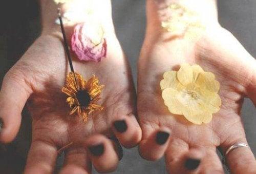 Getrocknete Blumen, die auf Händen liegen