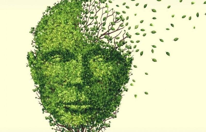 Gedächtnisverlust durch Stress? - Blätter fliegen von einem Baum weg, der einen Kopf bildet