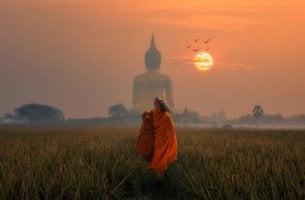 Buddhistische Psychologie - buddhistischer Mönch auf Feld