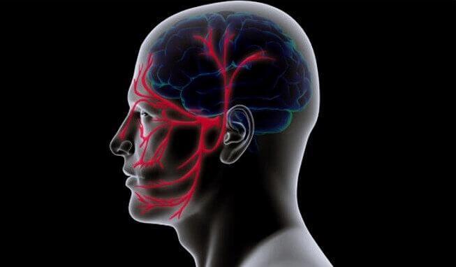 Verlauf des Nervus trigeminus