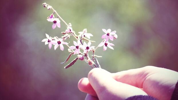 Kleine rosa Blumen