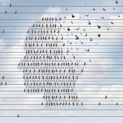 Vögel, die einen menschlichen Kopf abbilden