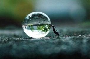 Ausdauer steigern - Eine kleine Ameise rollt mit großer Ausdauer einen Regentropfen vor sich her.