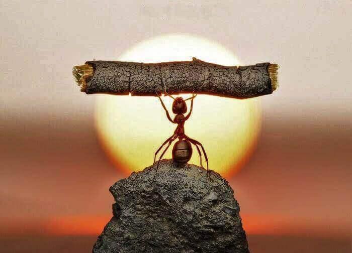 Eine kleine Ameise kann dank ihrer Ausdauer sogar einen Zweig hochheben, der größer als sie selbst ist.