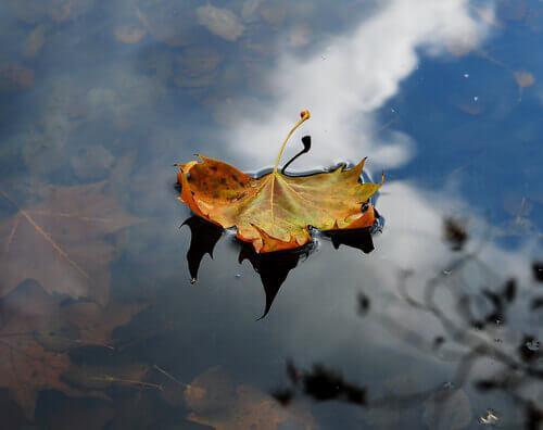 Herbstblatt, das in einer Pfütze liegt