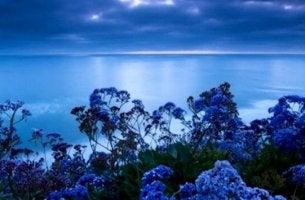 Welche Farbe baut Stress ab? - Blaue Blumen vor blauem Meer.