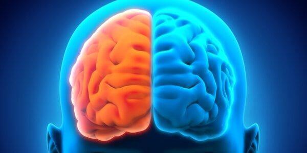 Die beiden Gehirnhälften farblich untermalt. Die linke Hälfte wird orange und die rechte Hälfte blau dargestellt.