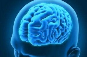 Neurologische Erkrankungen - Abbildung eines Gehirns in einem menschlichen Kopf.