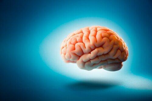 Ein Gehirn schwebt vor einem blauen Hintergrund.