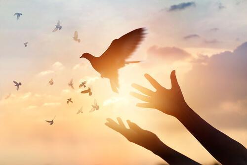 Mensch lässt Taube fliegen