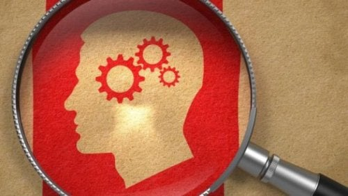 Gehirn mit der Lupe untersuchen