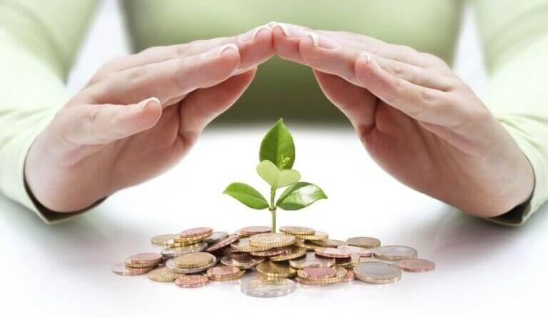 Mann hält seine Hände über Münzen, aus denen eine Pflanze wächst