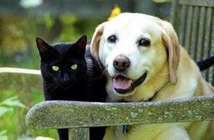 Haustier gestorben - Die Erinnerung an Katze, Hund & Co. bleibt.