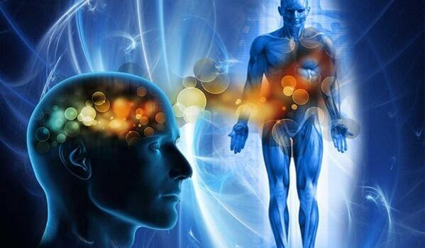 Der menschliche Körper: Der Kopf steuert den Rest.