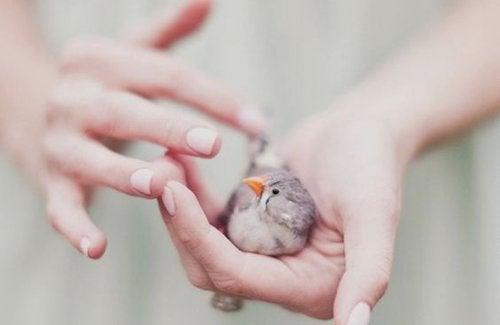 Ein Vogel auf einer Hand