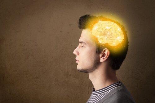 Gehirn eines Jugendlichen
