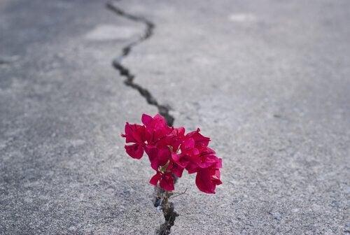 Blume sprießt aus einem Riss im Asphalt