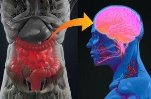 Probiotika für den Geist - Darm und Hirn